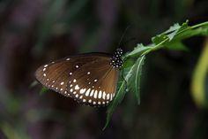 Butterfly by Prasul Prasanthan, via 500px