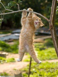chaton pendu arbre