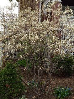 Designs of April offers landscape design, consulting and installation oversight services in the Chicago area. How To Attract Birds, Chicago Area, Garden Items, Red Berries, Native Plants, Amazing Gardens, Scarlet, Planting, Landscape Design