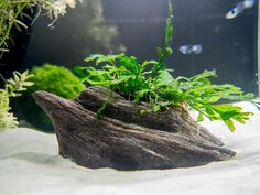 Dedicated White Aquarium Net 4 Inch New Cleaning & Maintenance