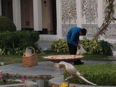 Ag cur peitil i mbabhla in Udaipur