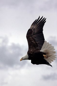 Jehovah's quality of wisdom is compared to the eagle, (far-sighted vision) and his ability to protect his people is compared to the eagle's wings, under which he protects his fledgelings.
