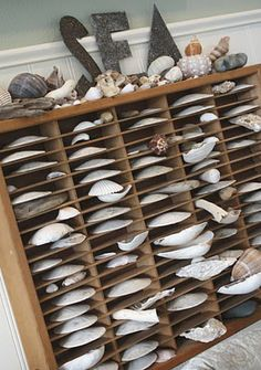 "My love of shells started when I purchased a book titled ""Shell Chic"" and my quest for beachfront property started when I read Mary Emmerling's ""beach cottages"".  Walking on the beach and shelling is one of my favorite things in life!"