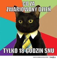 #kot #koty #instacat #mem #memes #memy #cat #cats #sleepingcat #funny #kochamkoty #catlover #crazycatlady #zabawne #smieszne #catstagram #catsofinstagram #instapet by szczescie_liczy_sie_w_kotach
