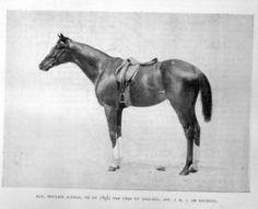 Elf II(1893)(Colt)Upas- Analogy By Adventurer. 4x5 To The Baron, Pocahontas & Birdcatcher. Won Prix Rainbow(Fr-3 1/8 miles)Twice, La Coupe(Eng)Twice, Ascot Gold Cup(Eng-2 1/2 miles)Twice, Prix Gladiateur(Fr- 3 7/8 miles)Twice, Prix De Lutece(Fr-1 3/8 miles), Prix D'Engham(Fr-1 7/8 miles).