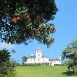 Take a walk from Onehunga to Pah Homestead - beautiful large trees, views, artworks, cafe or just peacefulness.