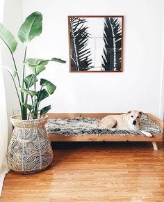 Pimp dog bed