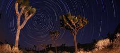 Star trails at Joshua Tree National Park.