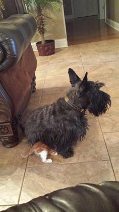 Malcolm sitting on Jeff (Owner Diane Rawson Hopkins - Malcolm the Door Greeter)