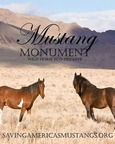 Mustang Monument is a non-profit dedicated to giving America's Mustangs free land to roam! #SaveAmericasMustangs