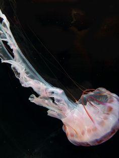Shedd Aquarium 2012