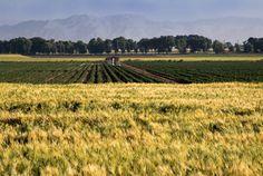 Farm fields south of Tehran