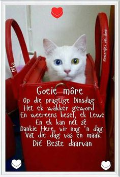 Evening Greetings, Afrikaanse Quotes, Goeie Nag, Goeie More, Strong Women Quotes, Happy Birthday Images, Jesus Is Lord, Happy Tuesday, Good Morning Quotes