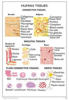 Worksheets Body Tissues Worksheet fields activities and training on pinterest