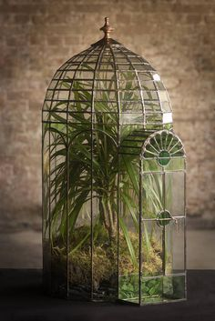 "figdays: "" Large Domed Glass Terrarium // KeithBaddams """