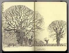 Ian Sidaway Fine Line Tree Sketches, In Natura, Artist Sketchbook, Ink Drawings, Landscape Drawings, Sketch Inspiration, Urban Sketching, Moleskine, Crayon