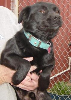 Tag - Clay County Animal Shelter in Henrietta, Texas - ADOPT OR FOSTER