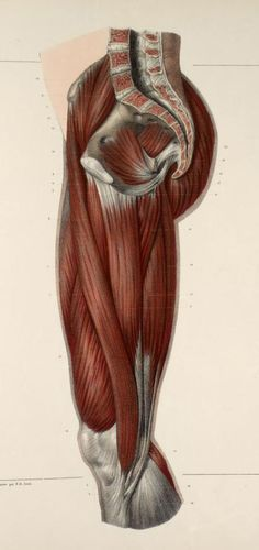 Jacob  Nicolas  Henri ,  ( 1782-1871 ) ,  fue estudiante del pintor francés  Jacques Louis David .  Ilustró  el tratado  en ocho vo...