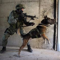 #IDF Military Working Dogs, Military Dogs, Police Dogs, Military Special Forces, War Dogs, Belgian Malinois, Mundo Animal, Service Dogs, Four Legged
