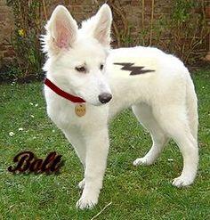 The real Disney Bolt! Dog Halloween Costumes, Dog Costumes, Dog And Owner Costumes, Cute Disney, Disney Art, Bolt Dog, Bolt Disney, Disney Dogs, Cute Animal Photos