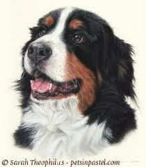Lifelike and sensitive Bernese Mountain Dog paintings by dog artist Sarah Theophilus. Pastel Portraits, Dog Portraits, Animal Paintings, Animal Drawings, Pet Dogs, Dog Cat, Dog Artist, Nostalgic Art, Oil Pastel Art
