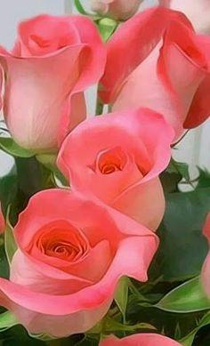 Roses in bloom Beautiful Rose Flowers, Love Rose, All Flowers, Amazing Flowers, My Flower, Flower Power, Orchid Flowers, Pretty Roses, Bloom