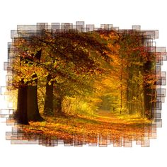 Autumn Backgrounds #2 (18).png ❤ liked on Polyvore featuring fall, backgrounds and effect