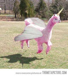 I'm a unicorn!