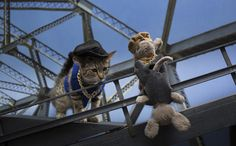'Keanu' Cat Calendar Reimagines 12 Beloved Movies with One Adorable Kitten