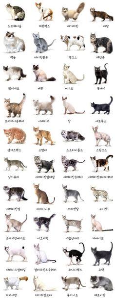 고양이 특징에 대한 이미지 검색결과