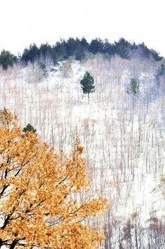 neve sull'Etna ©Alberta Dionisi