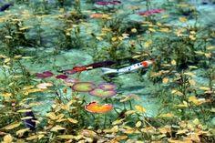 まるで絵画の世界!岐阜の国道沿いにある「名もなき池」の美しさに嘆息 | RETRIP