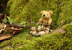 For this tiny bear it is always a pleasure to prepare something tasty in the wilderness. Now he wants to show you how to make your own herbal tea in the forest. Herbal Tea, Bored Panda, Wilderness, Herbalism, Teddy Bear, Make It Yourself, Cute, How To Make, Animals