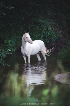What heaven does or doesn't have isn't up to me, but God does promise to redeem creation on the New Earth and I assume that includes horses...