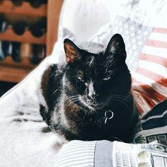 Minäkö keski-ikäinen?: Maailman helpoin laskiaispulla ja fiilistelyä Attitude, Lifestyle, Cats, Animals, Gatos, Animales, Mindset, Animaux, Animais