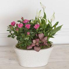 Pink Indoor Ceramic Planter