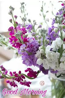 Good Morning Nature Flowers Images With Quotes Good Morning Flowers Good Morning Nature Good Morning Photos