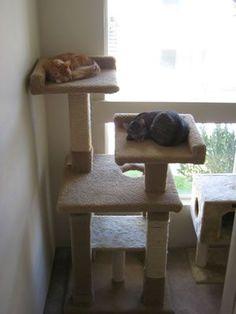 ... Cat House - DIYS Cat Condo Plan | DIY | Pinterest | Cat Trees, Cat #cat #stuff - Find what cat like at - Catsincare.com!