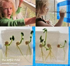 Interesting way to plant and watch seeds grow ..