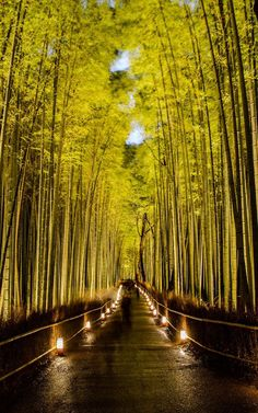Bamboo Forest street Japan