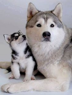 Photo: Husky Mom & Daughter