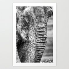 Young Elephant Art Print by Chris Thaxter - $28.08