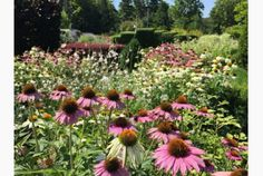 Massed coneflowers are part of a display at the Toronto Botanical Garden, the site of an upcoming symposium on biodiversity. Toronto Star, Botanical Gardens, Perennials, Fairy, Gardening, Display, Green, Plants, Floor Space