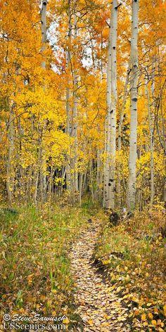 A Walk Through the Aspens Woods Lake, Uncompahgre Wilderness (Telluride, Colorado) Landscape Photography Tips, Tree Photography, Photography Business, Digital Photography, Photography Aesthetic, Photography Classes, Iphone Photography, Aerial Photography, Fall Displays