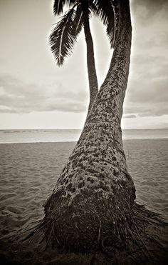 Hawaii 2012 Timeless 3008