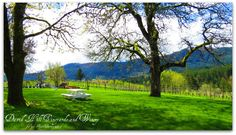 David Hill Vineyards April by Gayle Rich-Boxman David Hill, 2017 Photos, April 20, Countryside, Oregon, Golf Courses, Vineyard, Beautiful, Vineyard Vines