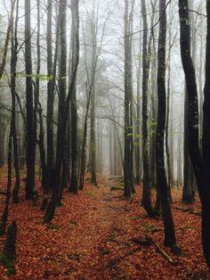 Nationalpark Bayerischer Wald - Pfade und Wege