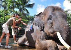 Elephant Park & Safari Lodge - Bali