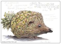 Rob Foote #art #illustration #coloredpencil #colour #pencil #prismacolor #fruit #animal #hybrid #porcupine #pineapple