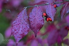 Autumn by picspassion #nature #mothernature #travel #traveling #vacation #visiting #trip #holiday #tourism #tourist #photooftheday #amazing #picoftheday